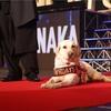 「日本を盲導犬先進国にする」ONE VISION PROJECT