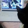 ◆黒猫ケンちゃん