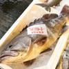 2017年12月4日 小浜漁港 お魚情報