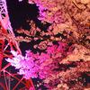 八幡山公園の花見イベント中止