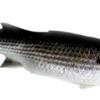 """珍味カラスミはこの魚から """"ぼら ー鰡ー"""""""