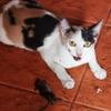 タイ猫がネズミを捕まえた。 でかいタイ猫が寝てると思ったら・・・・