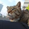 4月前半の #ねこ #cat #猫 その4