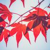 秋は過大評価され過ぎている