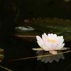 写真必須! 美しいモネの池