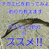 【テナガエビ】簡単テナガエビ(手長エビ)釣りのススメ