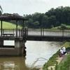 鯉釣り🐟愛知・大村池②🐟🐟池に行く道が通行止めになっています。⛔️⛔️