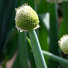 畑の側の花たち(2)