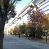 晩秋の昭和記念公園