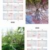 自分で撮った写真で2020年卓上型カレンダー作成。