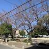 【シュティルタウン川口(第26期前川)】桜の木に、春の色がつき始めています
