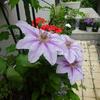 フォトジェニックな花