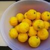 12月21日は、冬至。柚子湯、お庭の恵みをいただく!!!
