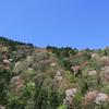彩り豊かなふたつの季節~新緑の山と紅葉の山~