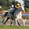 希少な白毛馬ソダシが阪神JFの本命に。過去の白毛馬についてもまとめてみる。