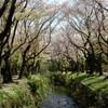 神奈川県大和市 引地川の桜を見に行ったらパンを食べて図書館に寄っていた