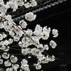 南禅寺の桜2016