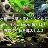 水槽・水草・流木・ソイルに苔が生えた時の対策とは?苔取り生体を導入せよ!