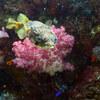 水中撮影:181006-08-04 石白川海水浴場、モウヤ岩礁/式根島・伊豆諸島シュノーケリング行 の事