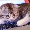 お気に入りのブログでも、記事を読むかは件名次第