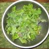 【家庭菜園】サニーレタスを収穫しました。