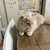 猫のトイレ問題の実態