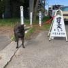 甲斐犬愛護会第148回展覧会の始まり
