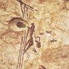じじぃの「現生人類・狩猟者から農民へ・骨でできた食器!人類の進化・大図鑑」