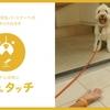 夏場、アスファルトは65℃以上!?火傷に用心!「#わんタッチ 」で愛犬の肉球を火傷から守ろう!