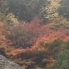 歩き始める保津川から嵯峨へ