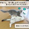 猫雑記 ~むくのルーティン・ご飯編~