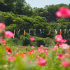 久里浜 花の国