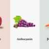 コスパ最強なアンチエイジング食『フィトケミカル』で細胞レベルで若返る!