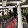 伊豆稲取の素戔嗚神社(すさのお)に日本一の雛壇飾りを見に行ってきたよ!