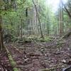 九州自然歩道#3 源じいの森~英彦山 2日目 2019年9月22日
