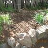 紫竹ガーデンとの関わり