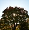 錦の植物園「休息」