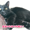 黒猫の性格と魅力!人気がない理由とは