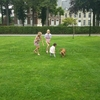 ベルギーの犬ちゃんたち