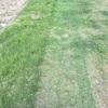 芝刈りシーズン到来