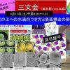 6/13<遠隔>【葉の上への水滴のつき方と表面構造の関係】