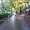 東福寺  明兆・大涅槃図  ホンモノは全然違うのです