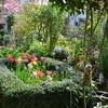 日時計の庭のチューリップとモヤ
