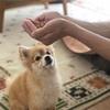 【犬の好物】〜本当にドックフードっておいしい?〜