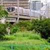 貨物線の廃線跡から 大阪環状線・大正-弁天町間