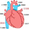 【基礎から学ぶ】冠状動脈【解剖生理学】