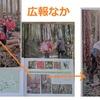 """森林整備 ご用の松(待つ)くまねこ""""怪""""進撃"""