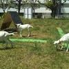 雑草対策 ヤギ除草は業者並