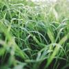隣の芝生は枯野原ー昨年末の迷言集ー
