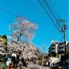 横浜山手の谷戸坂(やとざか)の桜2019